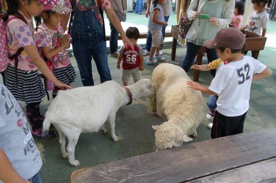 ヤギ&羊(市川市動植物園)