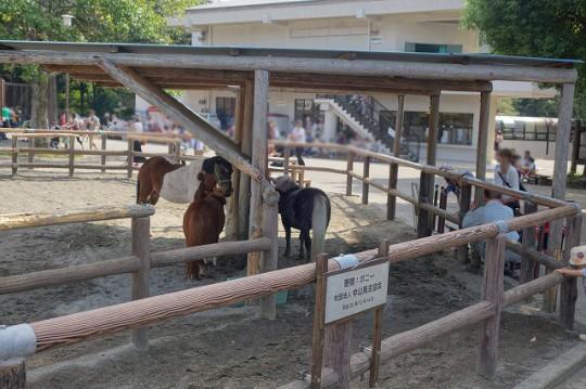 牛とロバ(市川市動植物園)