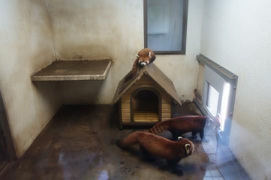 レッサーパンダの小屋