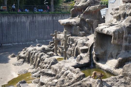 サル山(市川市動植物園)